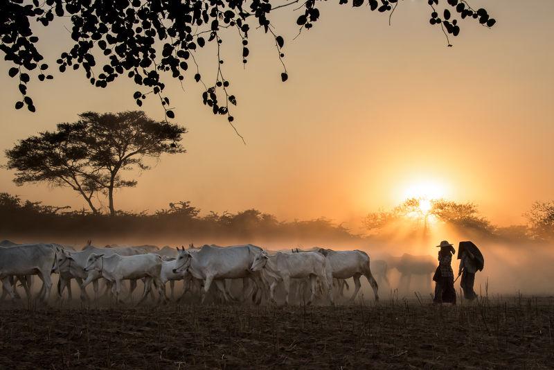Photographie Coucher de soleil en Birmanie