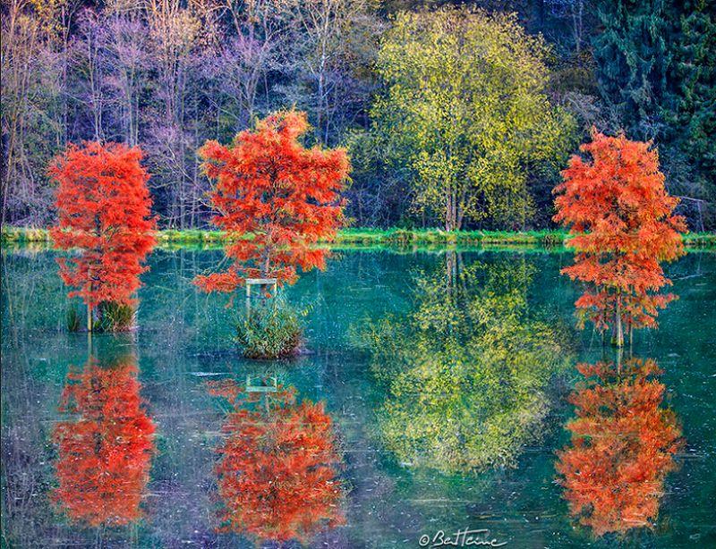 Photographie de forêt