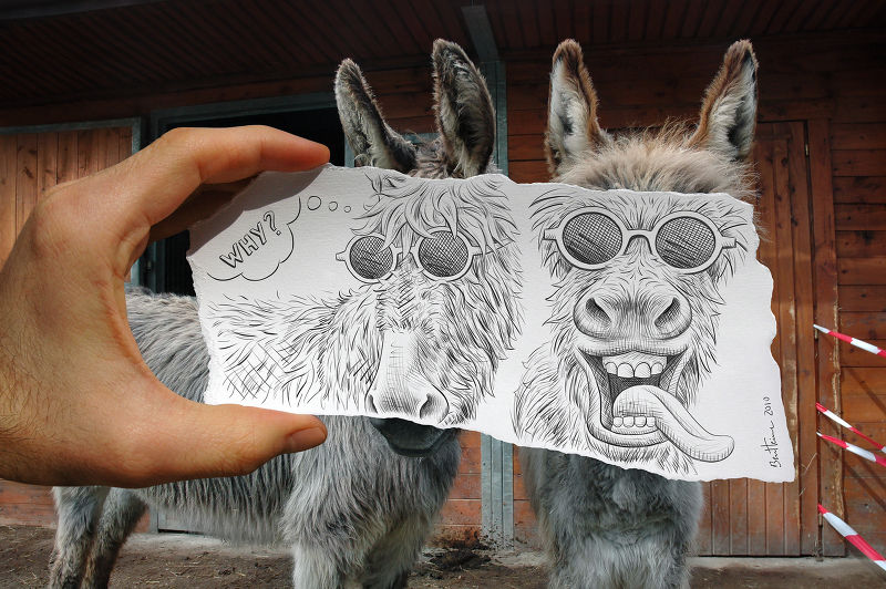 Photographie Pencil Vs Camera - Donkeys (© Ben Heine)