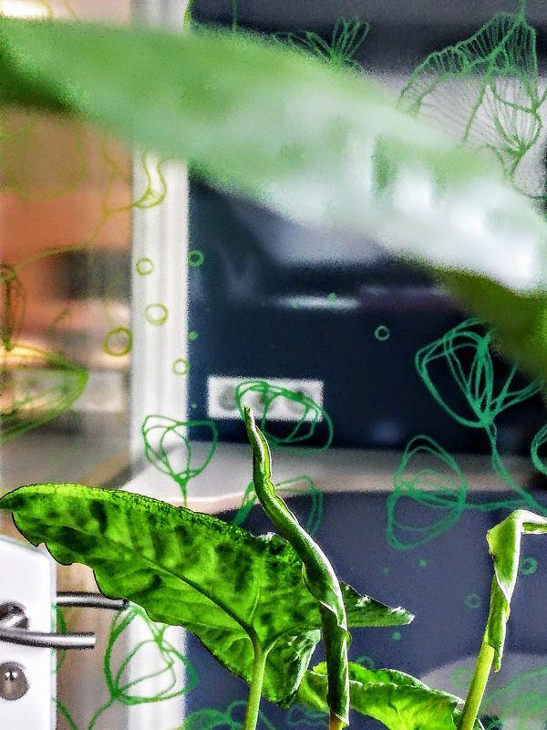 vitrophanie vegetale ginko