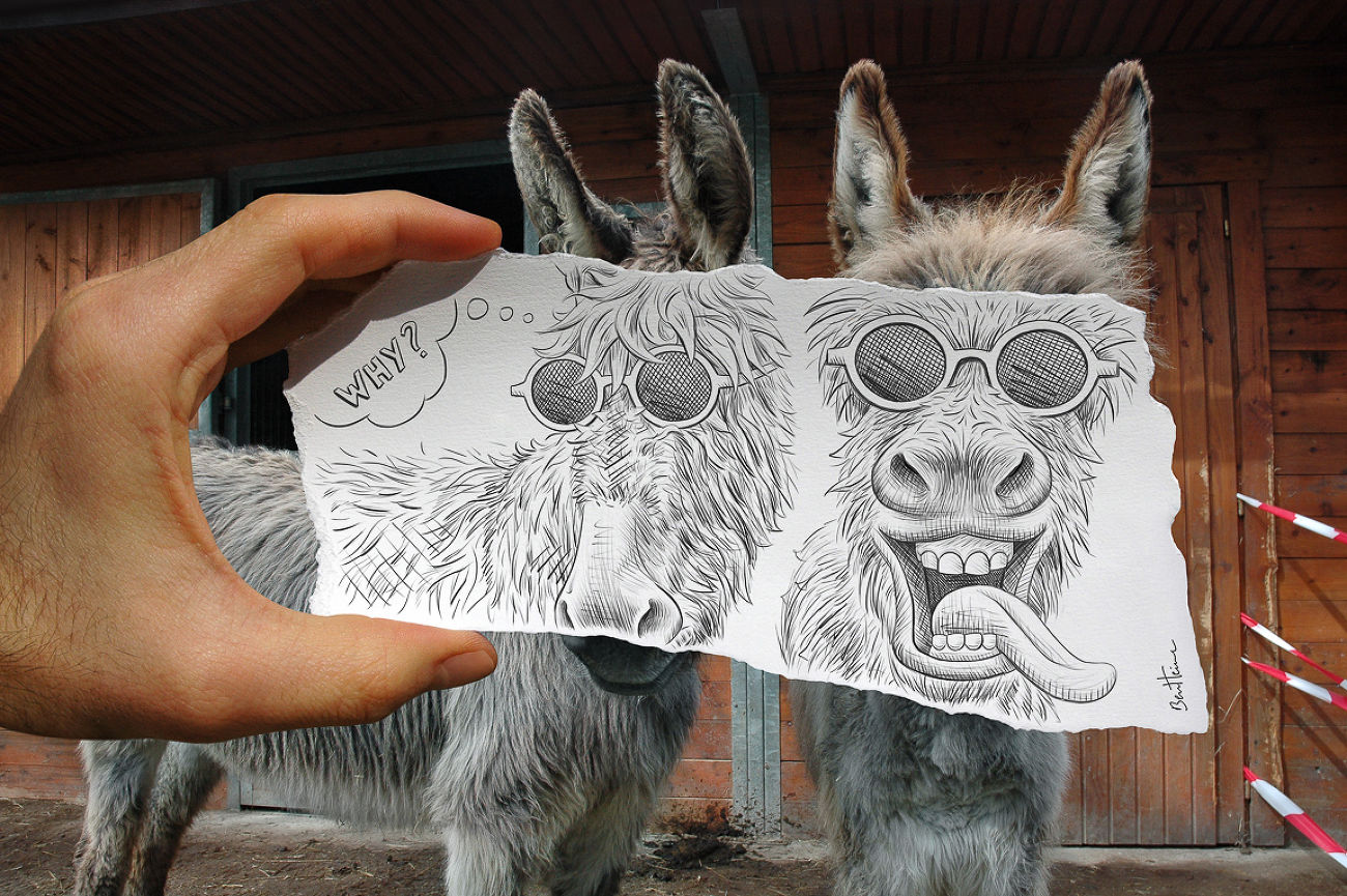 Pencil vs Camera - donkeys