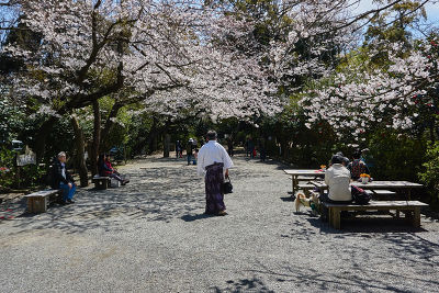 JAPAN - TOURISM -SAKURA- CHERRY BLOSSOM - 3