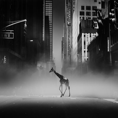 Une girafe à Time Square